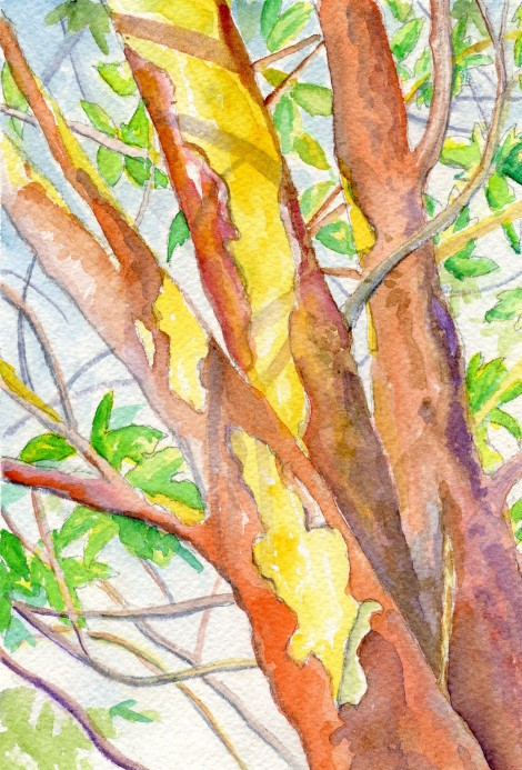 Arbutus (watercolour)