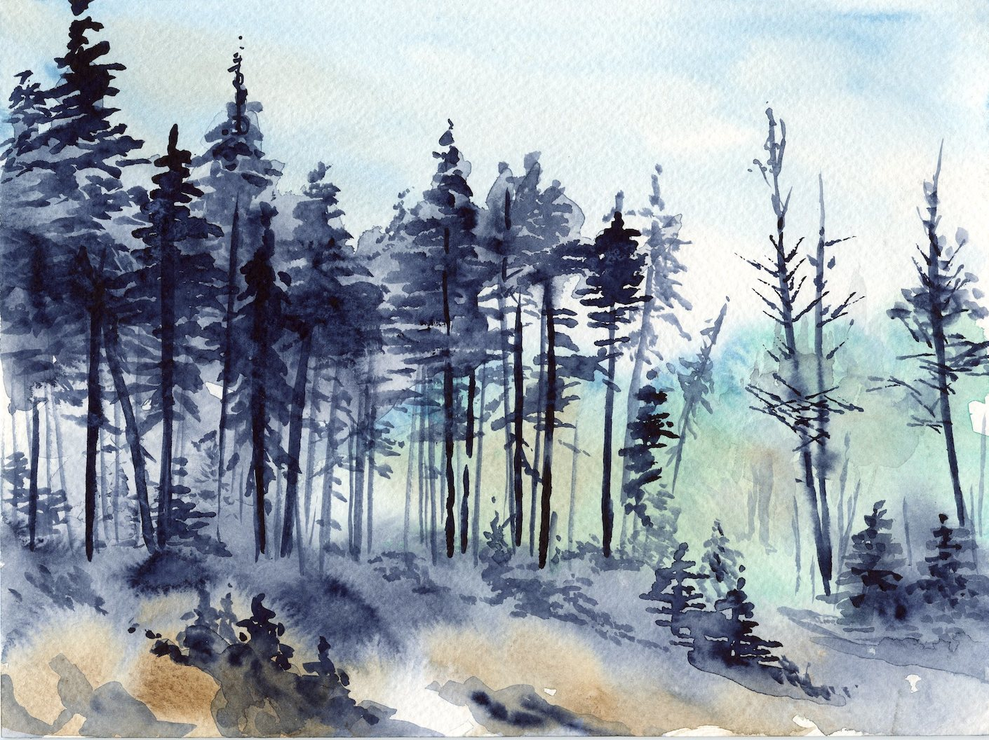 Edge Of The Woods Karen Gillmore Art