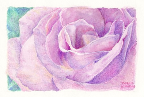 """Pink Rose"" — One of the most burnished coloured pencil paintings I have ever produced. This little thing is  the size of a greeting card, and it took me many hours."