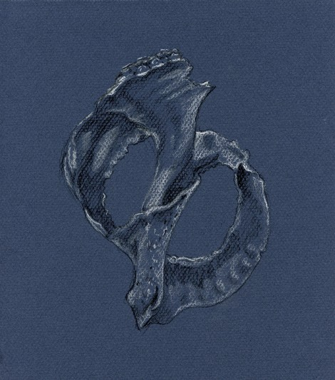 """Broken Seashell"" — I like to pick up broken seashells, because their curves are challenging and fun to draw. For this one, I used a technique I often use for figure drawing — woking on toned paper and just picking out the deepest shadow and the highlights with white and black pencils."