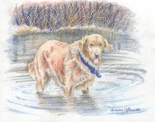 """Golden Retriever"" — coloured pencil. I got the detail of the brush in the background by indenting the paper through a piece of tracing paper with a pencil. The tracing paper protected the working paper from the pencil, and I was able to lightly colour over the indented lines with my coloured pencils, building up layers of mixed colours. I eventually decided the white lines this left were too stark, and went in with very sharp pencils in different colours to tone them down."