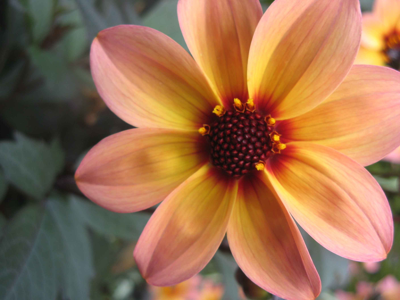 Technique Of The Week Coloured Pencil Flower Karen Gillmore Art