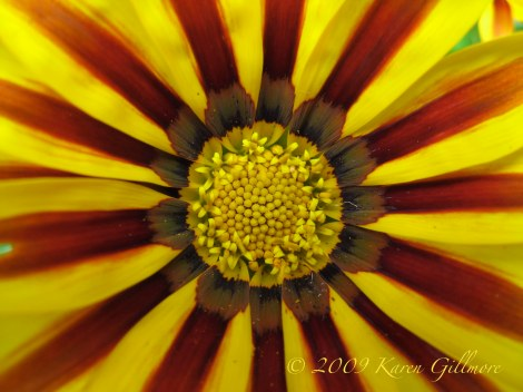 striped flower