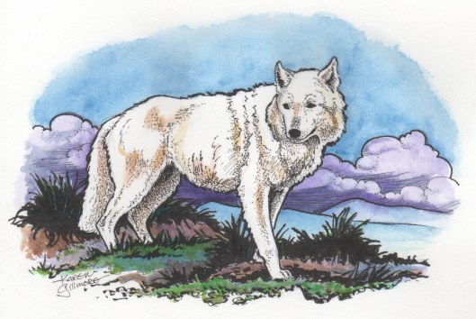 White Wolf — watercolour and ink