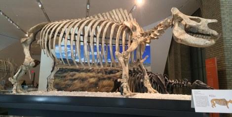 ... prehistoric mammals...