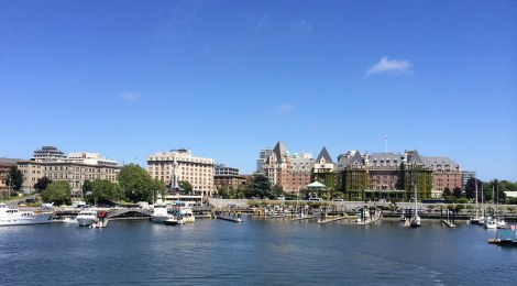 Victoria's Inner Harbour is a pretty busy place, with little sightseeing ferries (some of us call them bumbleboats because they remind us of bumblebees) bopping from point to point around the harbour, the huge new Hippos amphibious busses ploughing around between them, and floatplanes skimming across the surface like water striders, taking off and landing. Sailboats and yachts come and go from the many docks lining the harbour, and kayakers nose around the edges, investigating the strange lifeforms clinging to the pilings under the docks.