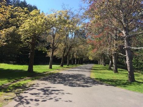 Tree Promenade