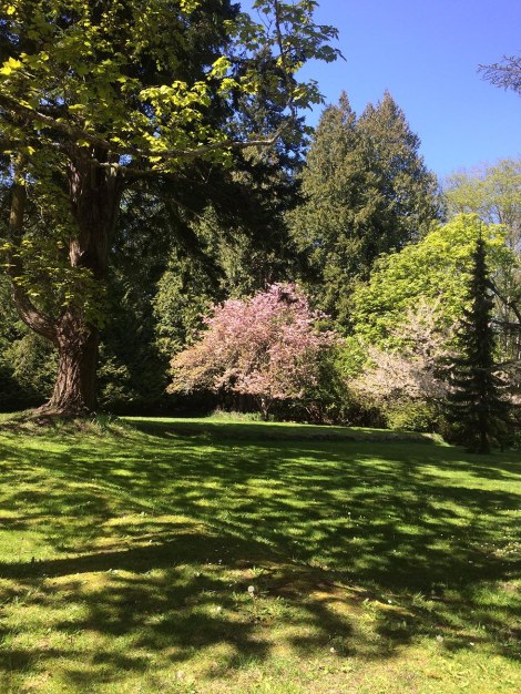 Dappled Lawn