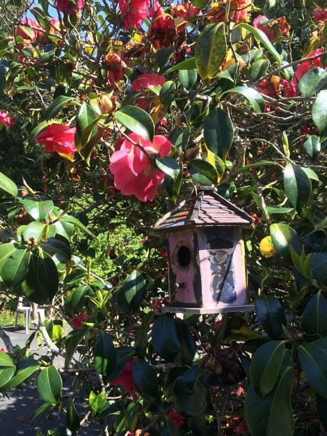Camellia Bird House