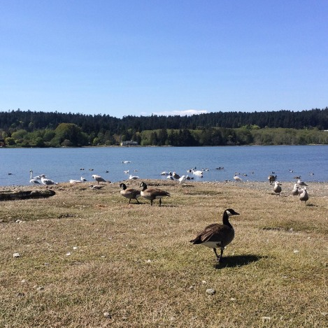 Birds at Esquimalt Lagoon