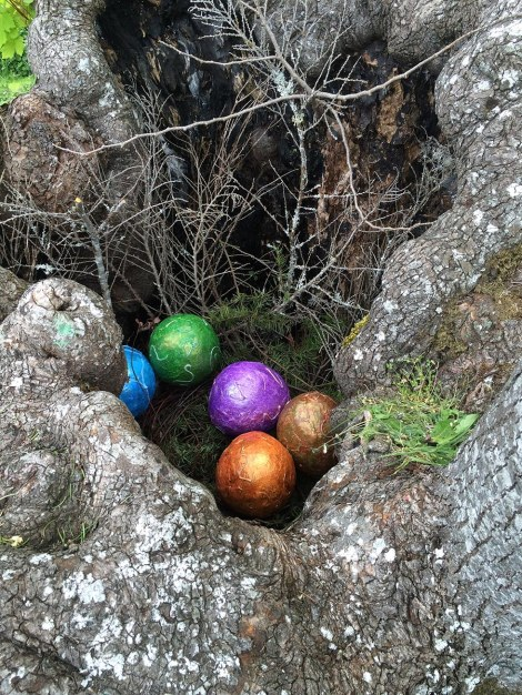 … inside the tree there are eggs, and what could they be but dragon eggs? Who knew dragons nested in trees?