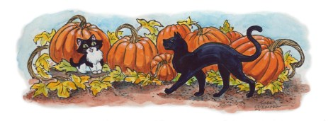 cats-n-pumpkins colour