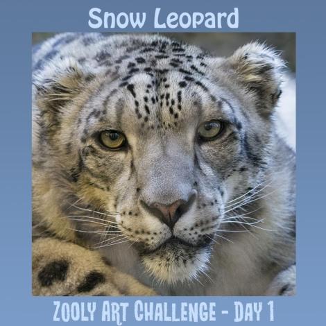 1B.2 Snow Leopard.jpg