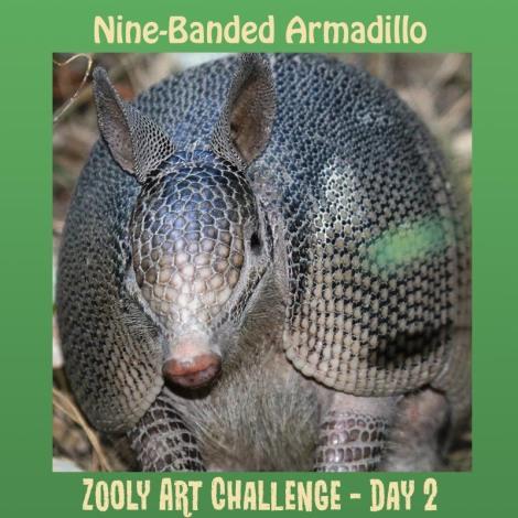 2B.2 nine banded armadillo