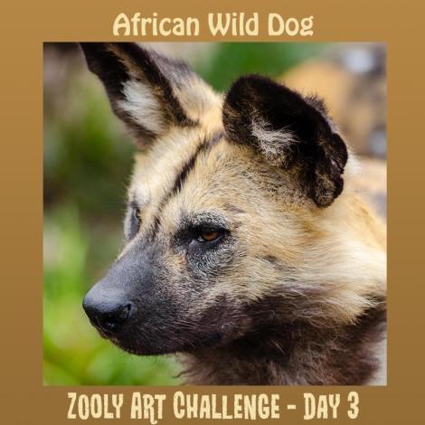 3B African Wild Dog
