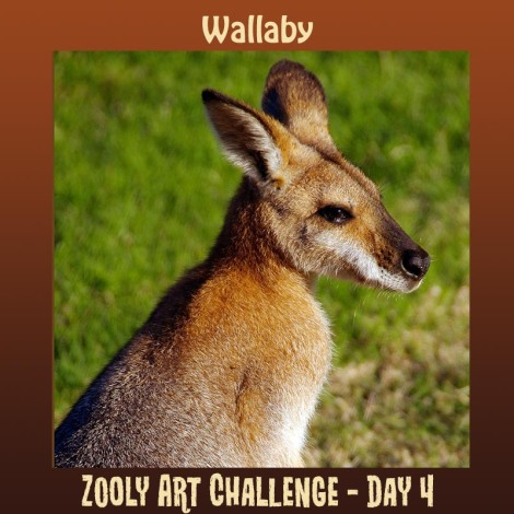 4B Wallaby