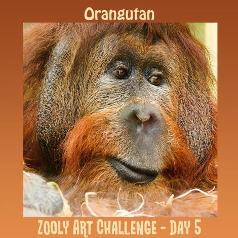 5B orangutan