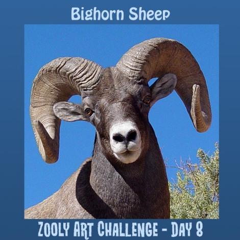 8B bighorn sheep
