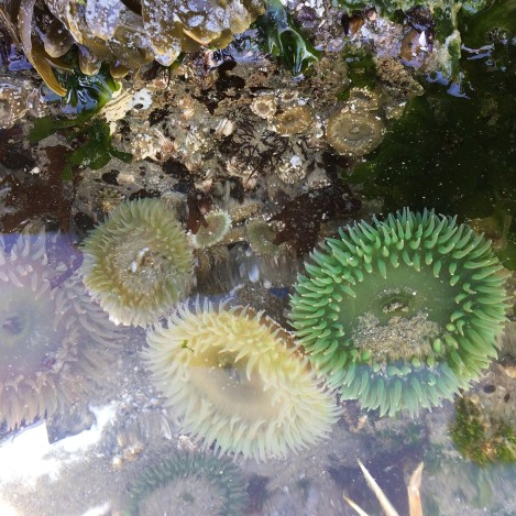 Green Anemones 2.jpg