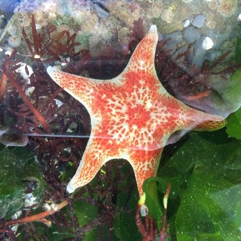 leather star.jpg