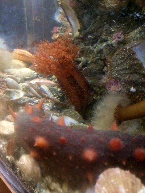 Sea Cucumbers.jpg