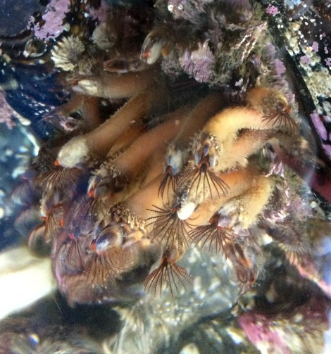 tube worms.jpg