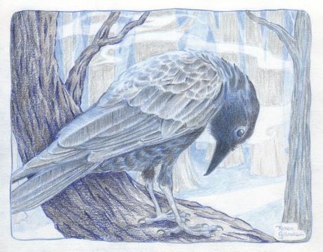 crow 7 sm