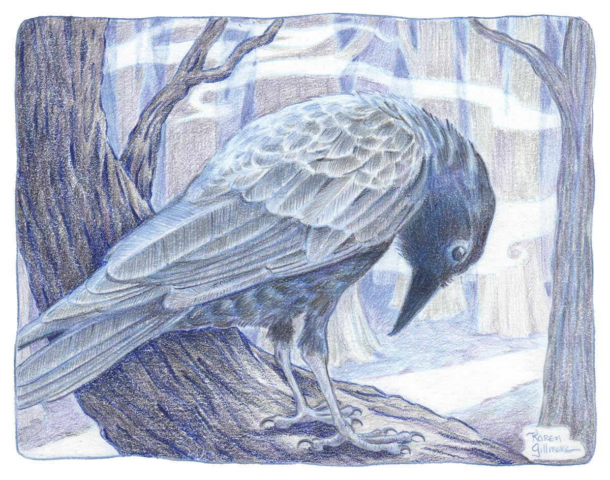 Drawing a Crow in Coloured Pencil