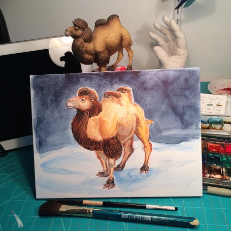 Bactrian Camel 1.jpg